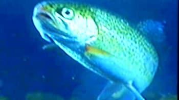 Video : मछली पालो, मच्छर भगाओ!