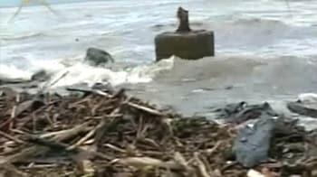 Video : Mumbai oil spill affects marine life
