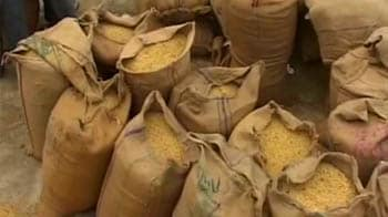 Video : 4000 sacks of soyabean rotting in Nagpur