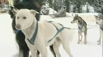 Video : Outrage in Canada after 100 dogs shot dead
