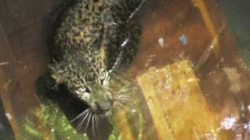 Video : Leopard rescued from well after 8 hours