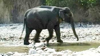 Videos : कार्बट के कानून से बेहाल हाथी