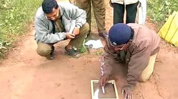 Video : Tiger census: Orissa rejects numbers