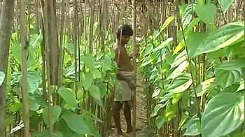 Video : POSCO site: Tribals trying to prove their existence
