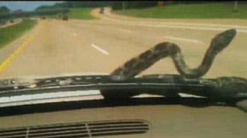 Video : 'Ok, there's a snake on our windshield'