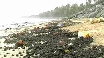 Video : Oil spill damage: Who should pay?