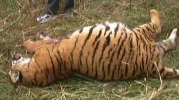 Video : Third tiger death in a month at Corbett