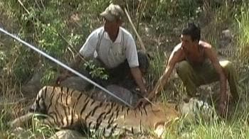 Video : Now, daily count of Tiger deaths