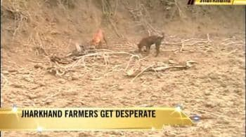 "Video : Farmers: ""Help Us or Kill Us"""