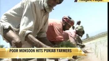Video : Poor monsoon hits Punjab farmers