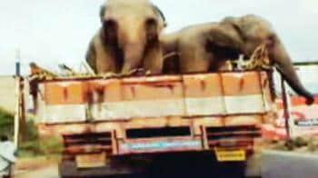 Video : Bangalore elephants: Easy riders