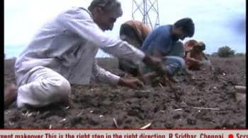 Video : Malwa farmers waiting for rains