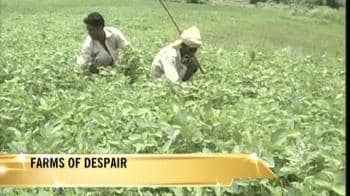 Video : Toor dal, soybean, paddy destroyed
