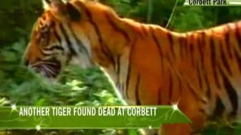 Video : NGOs, activists demand more actions to save big cats