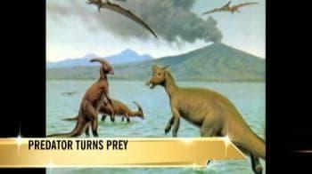 Video : Predator turns prey