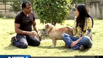 Video : Dogs are man's best friends