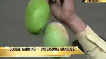 Video : Gujarat: Mangoes make unseasonal appearance