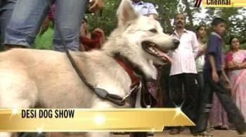 Video : Desi dog show