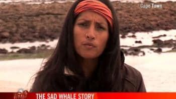 Video : The sad whale story