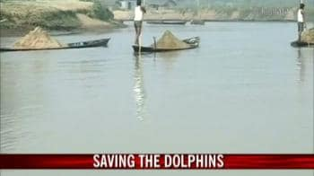 Video : Loving and living with dolphins