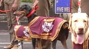 Video : Calamity? Dogs to the rescue
