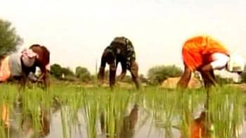 Video : Millets: The miracle greens