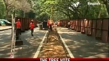 Video : Bangalore: The tree vote
