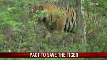 Video : Pact to save the tiger