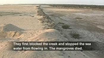Video : Gujarat's mangroves under threat