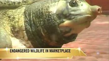 Video : Endangered turtles sold in Agartala market