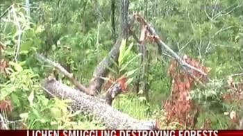 Video : Plant-life smuggling in Assam